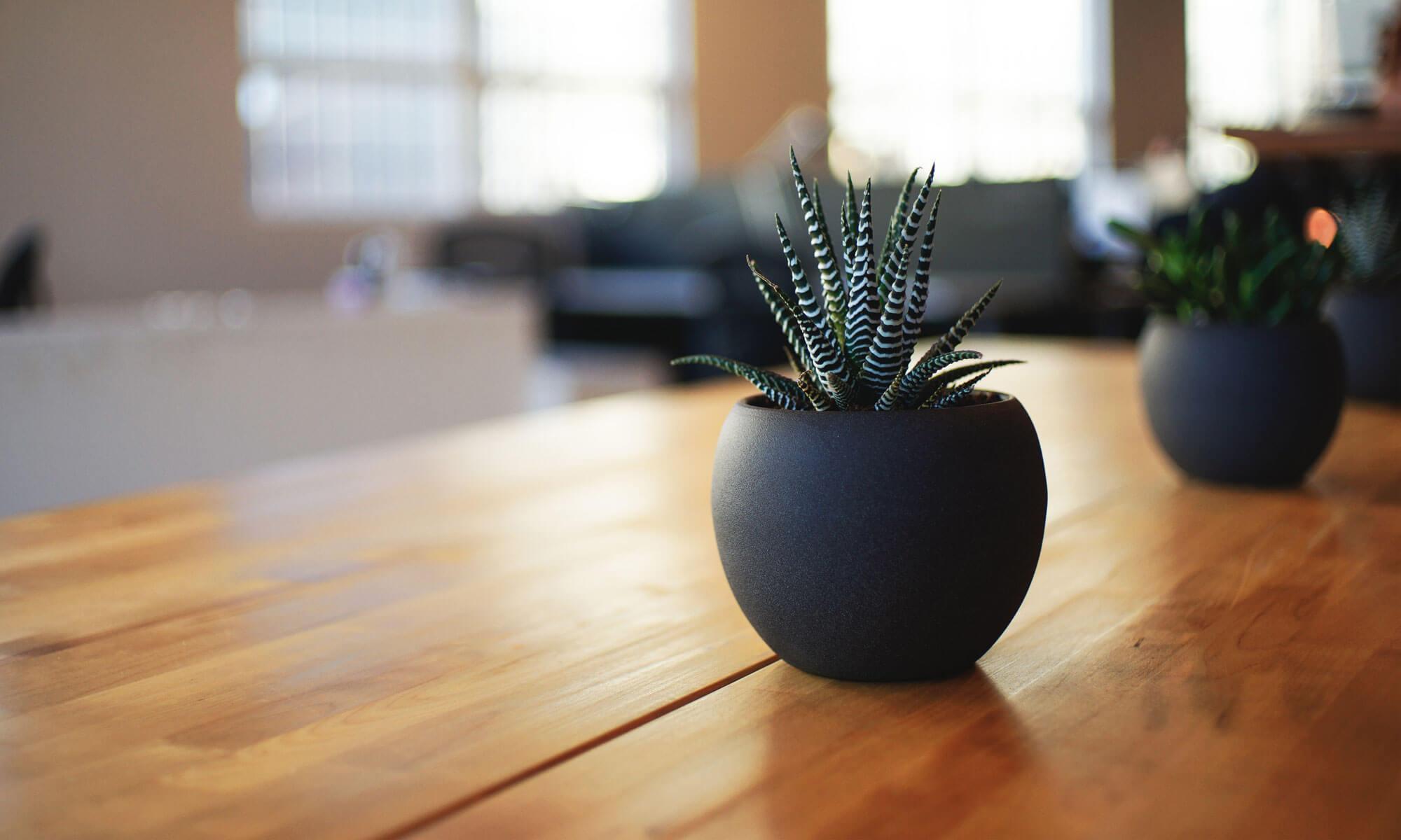 فروشگاه خرید اینترنتی پکیج های دمنوش های لاغری و گیاهی|09397795970